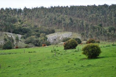 Campo Forestal En Mariscala