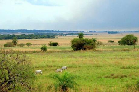 Campo En Yuty, Caazapá