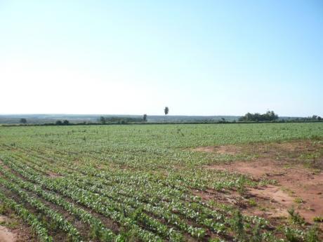 Inmueble Agricola En Canindeyú