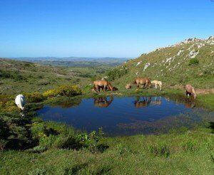 Paradisíaco !!!300 Hectáreas En Minas, A  50 Km De Punta Del Este