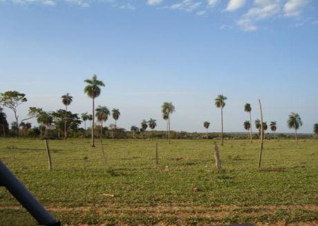 1.650 Hectareas, Caaguazu, Zona Simon Bolivar
