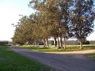 Avenida Eguzquiza (miramar Acres)