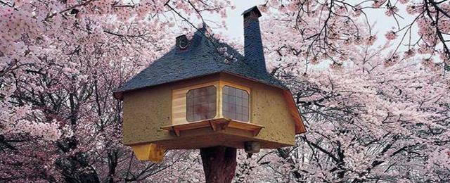 Las casas más increíbles construidas sobre los árboles
