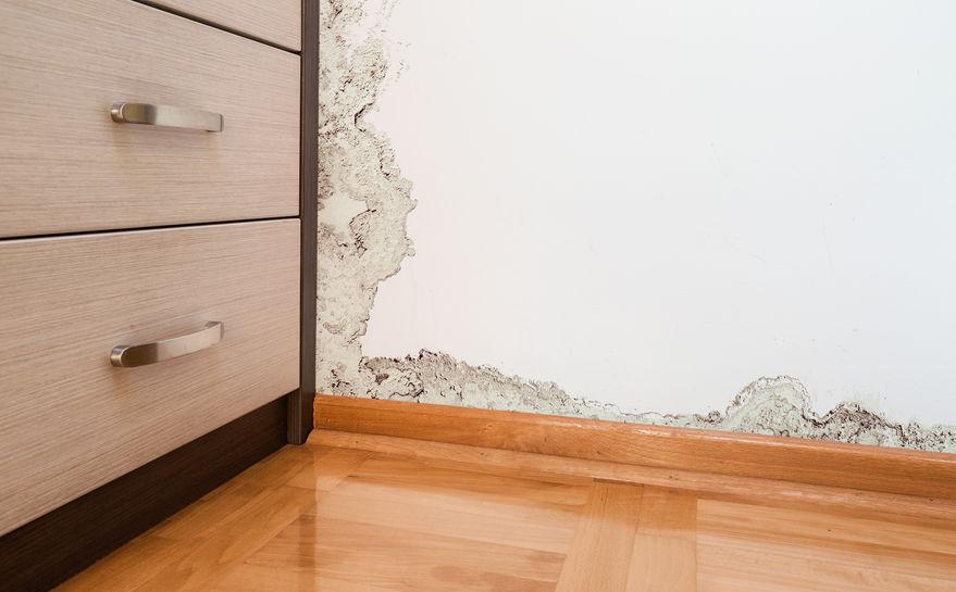 Guía para elegir la casa pefecta: manchas de humedad