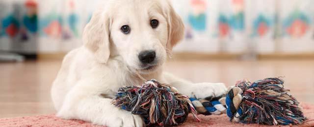 Encontrá la casa perfecta para vos y tu mascota
