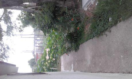 Alquilo Casa En San Jose De Carrasco Con Jardín Y Fondo