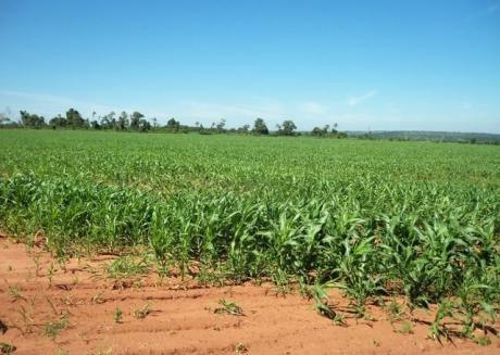 Caaguazu 1.700 Has Tierra Agricola Mecanizada,y Ganadera