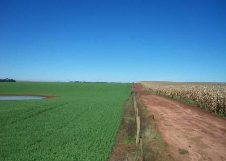 Vendo 699 Has De Terreno Agricola - Alto Parana Caaguazu Sobre Lago Yguazu