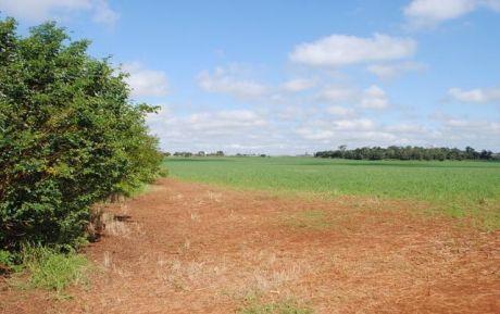 Tierra Agrícola 876 Ha
