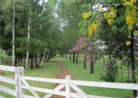 Vendo Lujosa Estancia Con  Terreno Agricola De 500 Has En Zona De Piribebuy