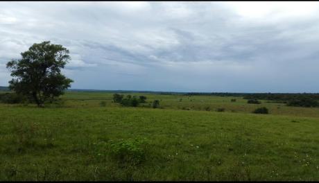 Campo De 30000 Hectareas Con Costa Al Rio Paraguay