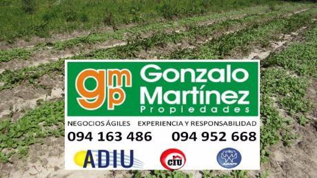 Campo Zona De Pleno Desarrollo Cerca Montevideo