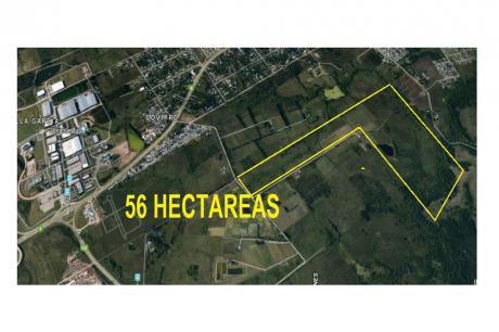 56 Hectareas Próximo Zonamerica - Ideal Inversion