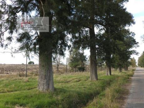 Excepcional Campo, 16.5 Has. Sobre R36. Cerrillos