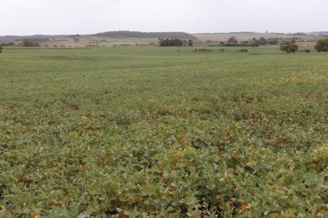 31 Has Agricolas- Canelones
