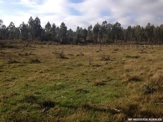 Pando, 95 Has Parte Forestadas, Campo En Soberbia Ubicacion.
