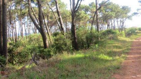 Terreno En Ocean Park - Ref: Pb1950