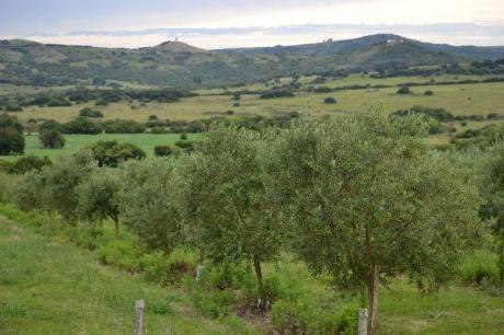 Chacras En Zona Rural - Ref: Pb2125