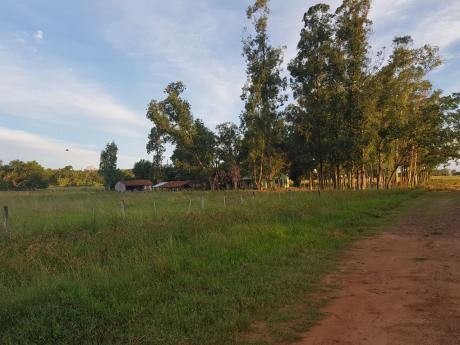 San Pedro Del Paraná - Itapúa - 636 Hectáreas - Sobre Ruta 8 - Para Ganadería