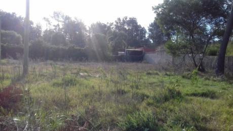 Terreno En El Pinar