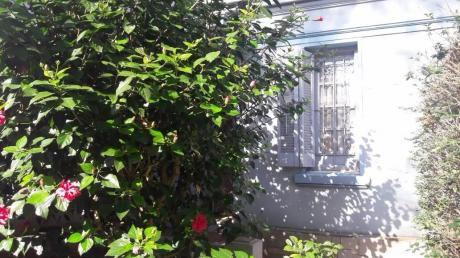 Hermosa Casa Con Jardín Amplia  Y Luminosa Sobre Calle