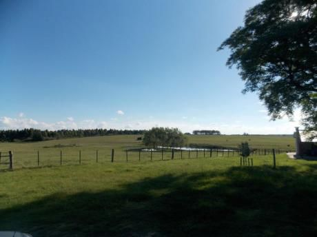 61 Hectareas - Campo Mejorado Sobre Ruta 7 - Cria De Ganado O Cultivo