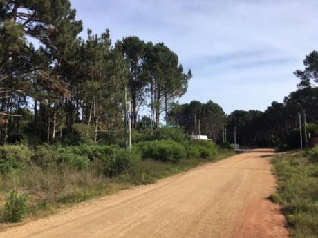 Terrenos En Pinares: Vaz5600t