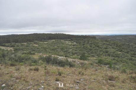 Campo Forestal En Sierra – Lavalleja