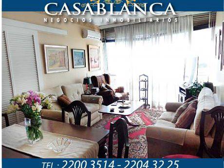 Casablanca - Hermosa Planta