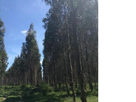 Muy Buen Campo Forestal