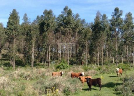 Campo Forestado Prox. Castillos