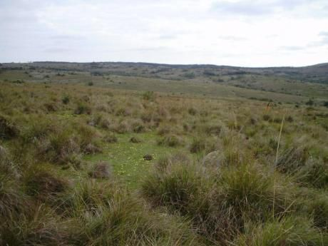 Campo Ganadero Forestal