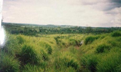 Vendo Estancia En Caaguazu 600 Has Aprox Para Ganaderia Y Agriculutra