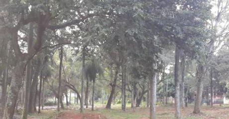 Vendo 5  Hermosos Lotes En Esquina  En Aregua - Valle Pucu