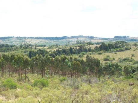 Pueblo Eden - Ruta 12 - 8,6  Hectareas  - Oportunidad . Excelentes Vistas