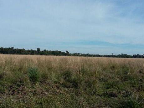 Campo De 110 Hectareas Sobre Ruta 1 Km181