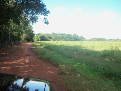 Caazapá 300 Has Tierra Roja Mecanizada Sobre Ruta