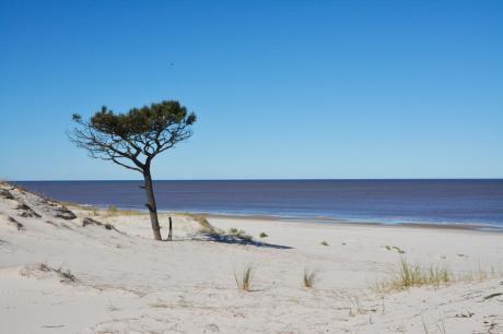 Hermoso Terreno Frente A Las Dunas Y El Mar