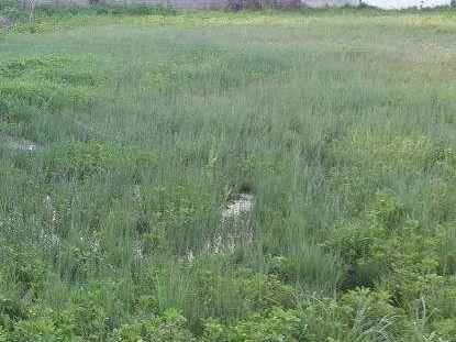 Excelente Terreno, Ubicado Frente A La Playa Km 25 Rambla Costanera.