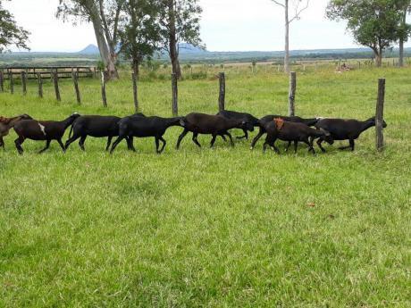 Vendo De 300 A 700 Hectáreas De Campo En Quiindy, Paraguarí