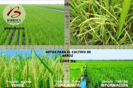 Propiedad Agrícola En Venta En Santa Cruz