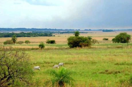 Vendo Campo Agro-ganadero