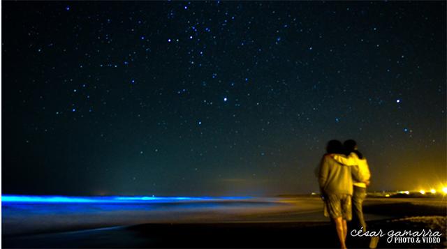 bioluminiscencia.png