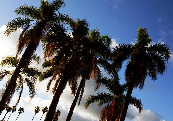 palmeras1.jpg