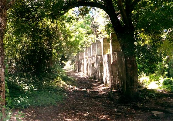 arboretum2.png