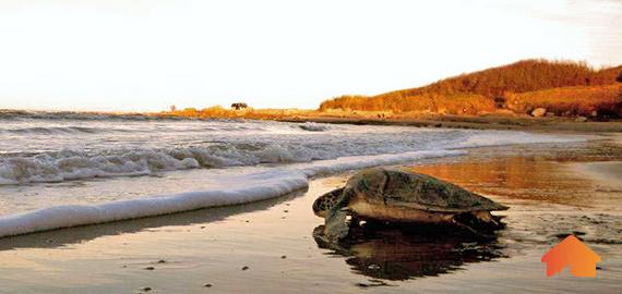 tortugas-en-la-coronilla.jpg