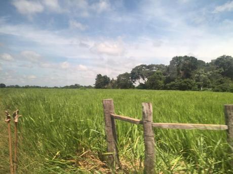 Terreno En Venta 1200 Ha, Zona Lujan, Frente A Ciudad De Dios