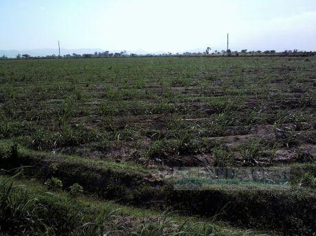 Terreno Agricola Venta Valle Jequetepeque - Chepen