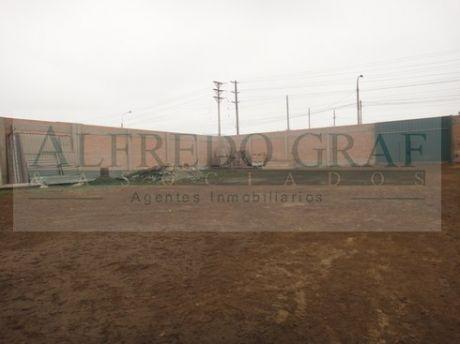 Terreno Agricola Alquiler Km. 36.5 Antigua Panamericana Sur - Lurin