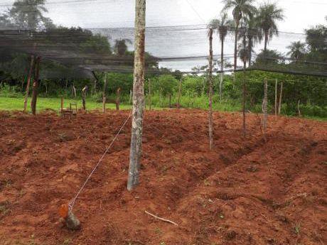 Vendo Granja Compuesta Por 11 Lotes Con Arroyo En Caacupe